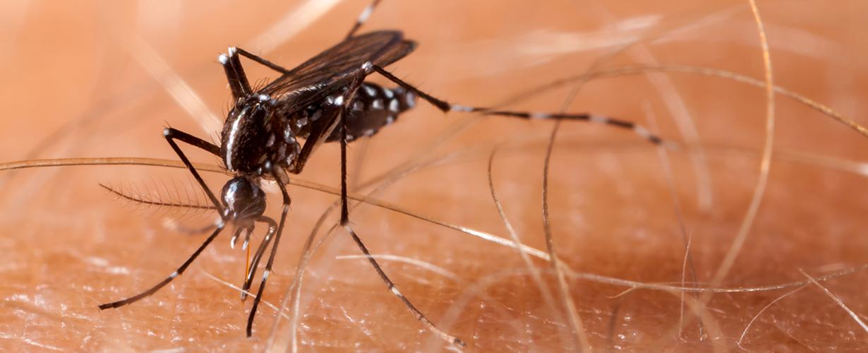 Dengue | WHO | Regional Office for Africa