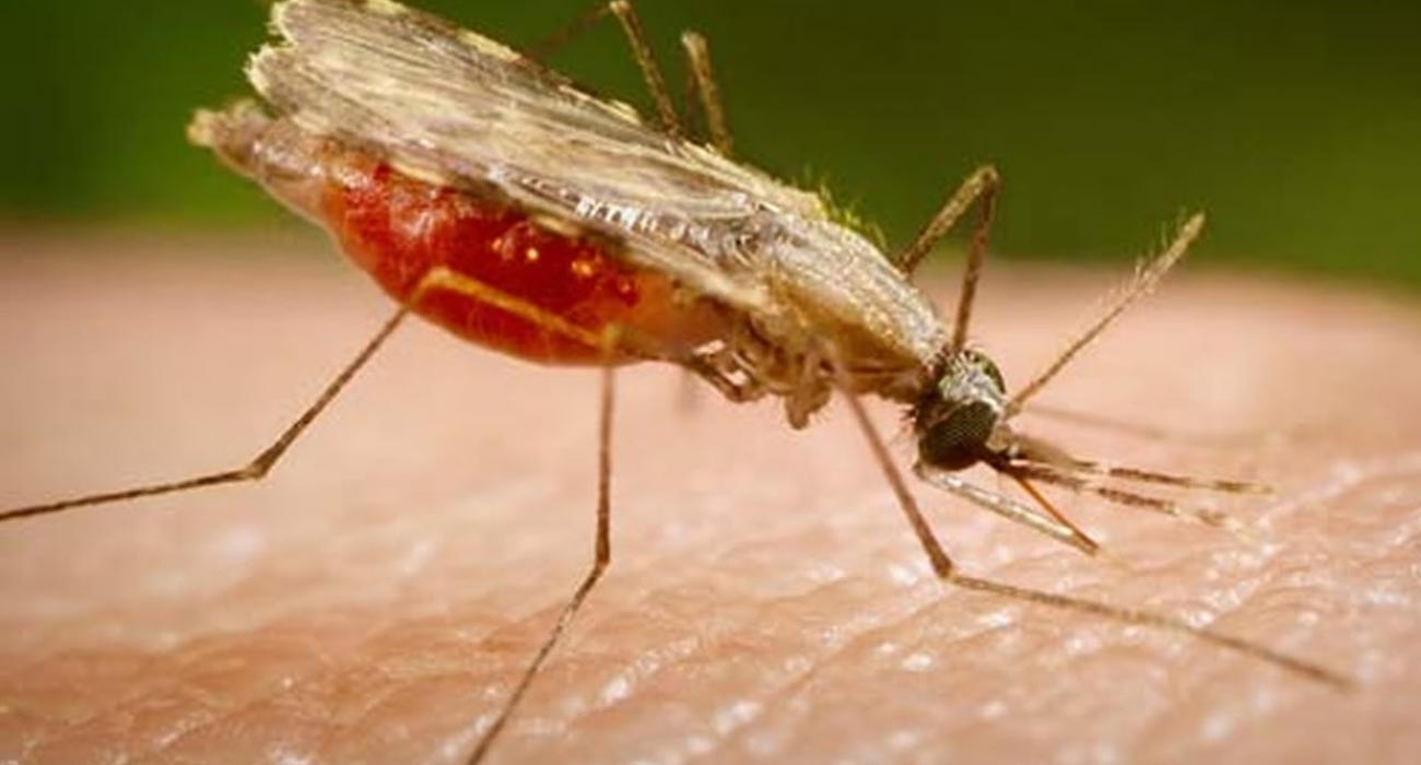 Fostering the China-Africa cooperation for the elimination of Malaria