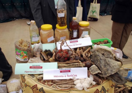 African Traditional Medicine Day 2012