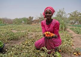 When microfinance leads to major healing: Bridging agriculture and health in Senegal