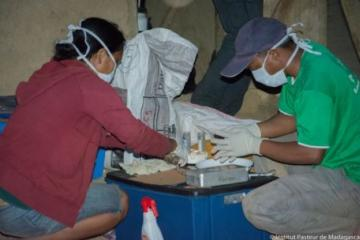 WHO provides 1.2 million antibiotics to fight plague in Madagascar