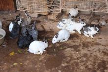 Rabbit rearing project